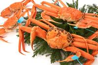写真 Addictive crab ? male and female(5435045)