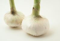写真 New Onion(5435551)