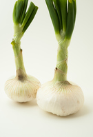 写真 New Onion(5435764)