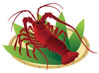 イラスト Ise shrimp pense shrimp white background(5436462)