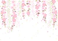 イラスト A branched cherry tree willow(5437190)