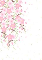 イラスト A branched cherry tree willow(5437205)