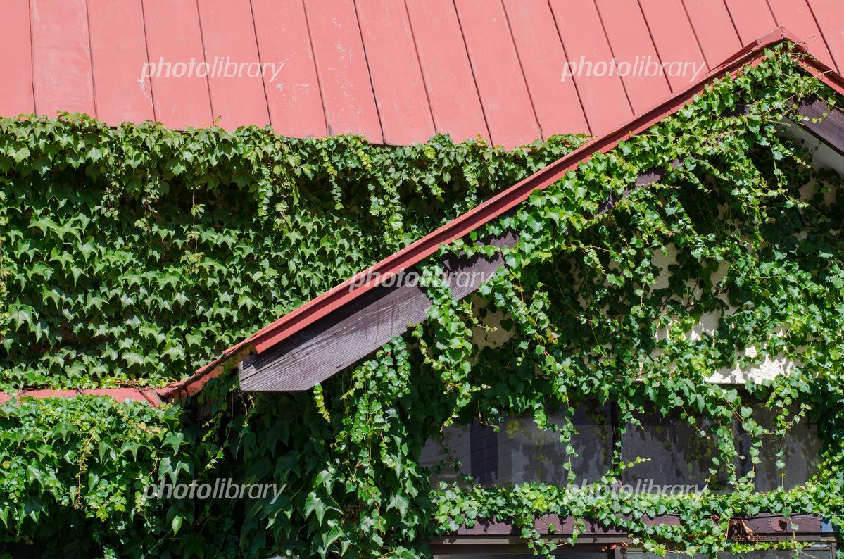 蔦に覆われた家 写真素材 [ 5470...