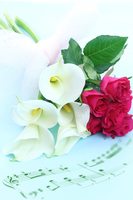 写真 Composition of musical score of color and rose bouquet(5470316)