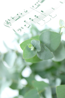 写真 Composition of eucalyptus and score(5470325)