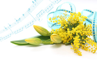 写真 Synthesis of yellow tulips and mimosa's bouquet and score(5470327)