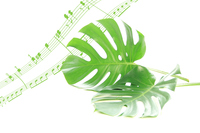 写真 Synthesis of monstera leaves and music score(5470328)