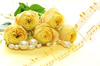写真 Synthesis of yellow rose and pearl and score(5470332)