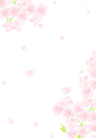 イラスト Sakura glittering cherry blossom snow storm illustration(5471569)