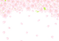 イラスト Sakura's flower arch Sakuragi snow glitter illustration(5471597)