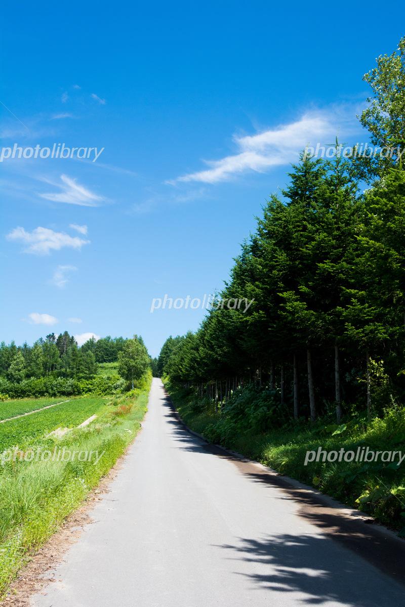 田舎の坂道 写真素材 5577476 フォトライブラリー Photolibrary