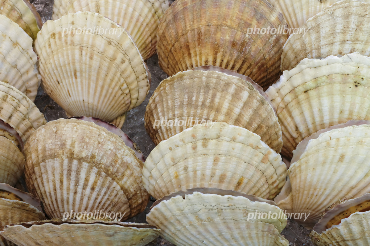 Scallops on sale at stores Photo