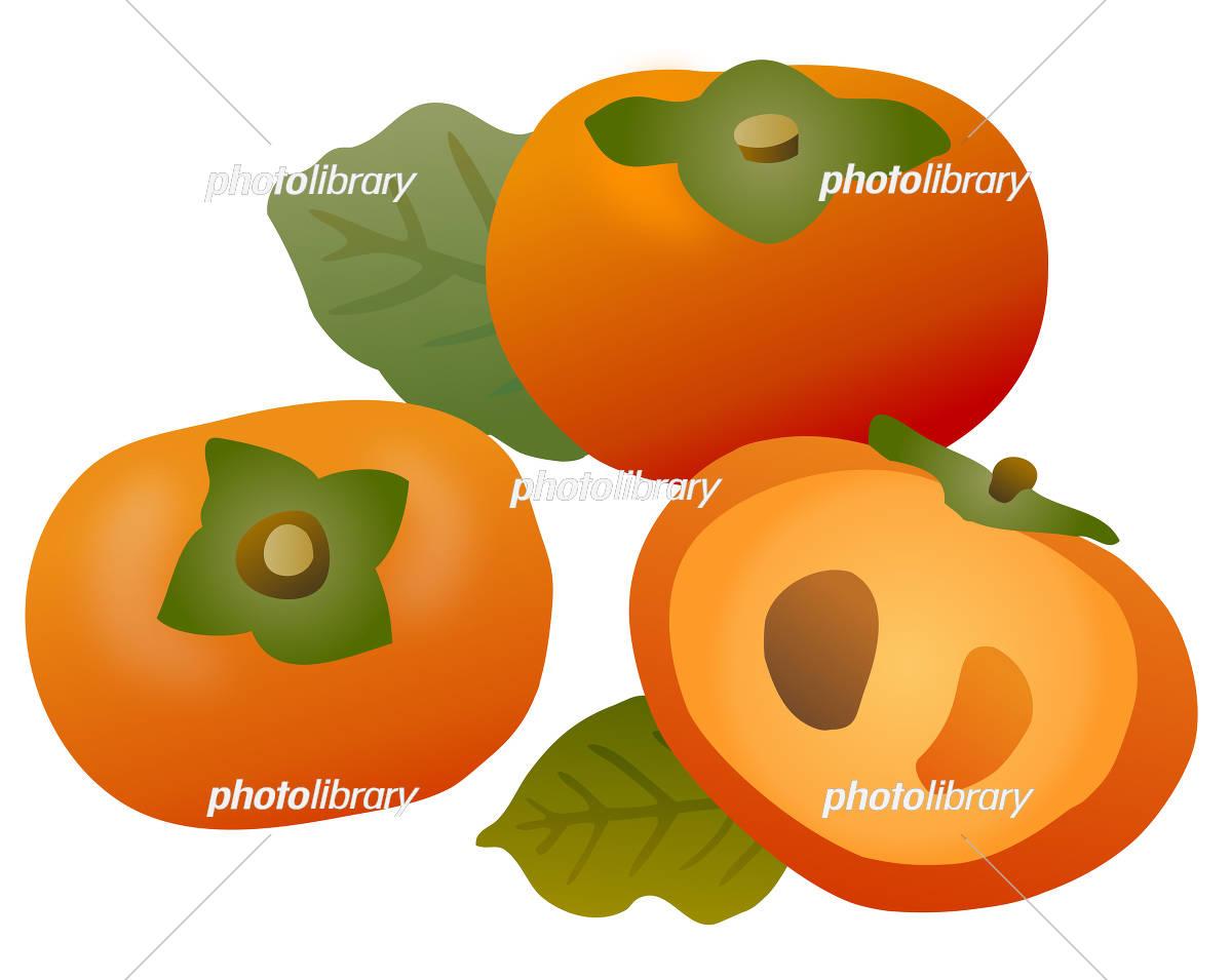 柿と葉っぱ イラスト素材 5682784 フォトライブラリー Photolibrary