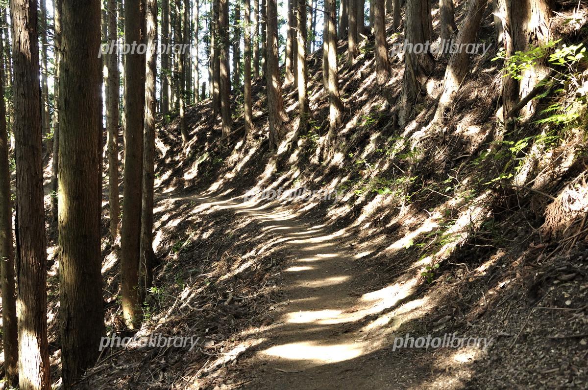 陽射し木洩れる登山道 写真素材 ...