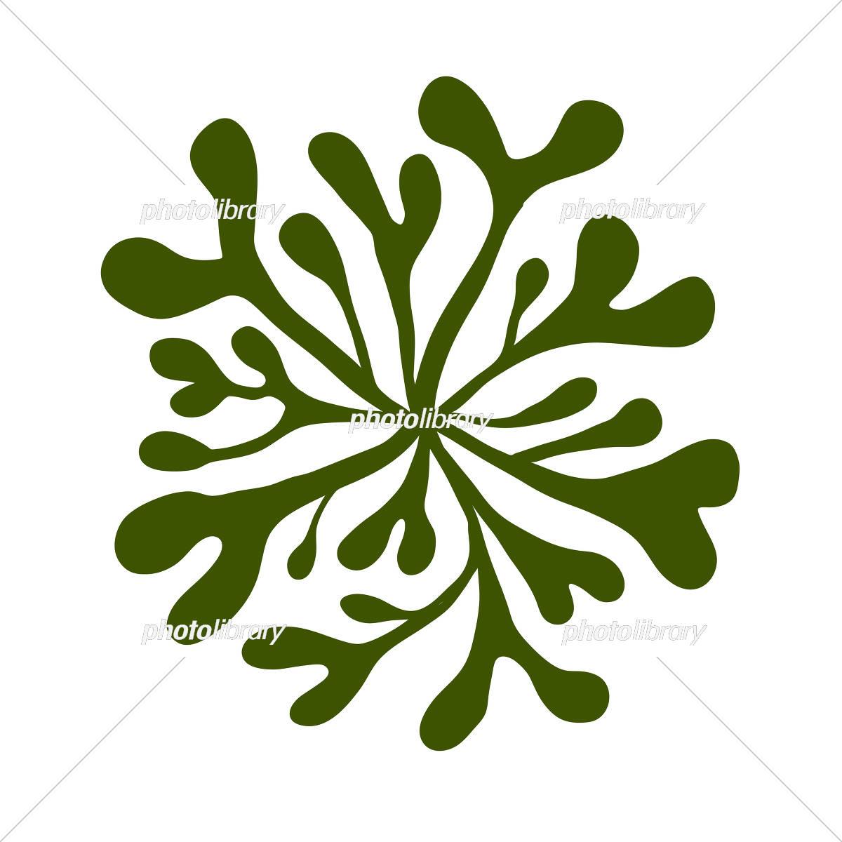海藻 海松紋みるもん イラスト素材 5862581 フォトライブ