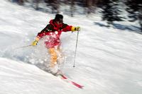 Skiers Stock photo [221548] Skiing