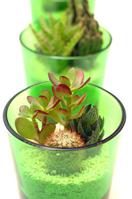 Cactus Stock photo [261934] Cactus