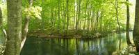 Green beech forests Stock photo [264052] Aomori