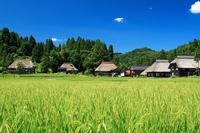 Takayanagi cho Oginoshima Stock photo [268059] Niigata