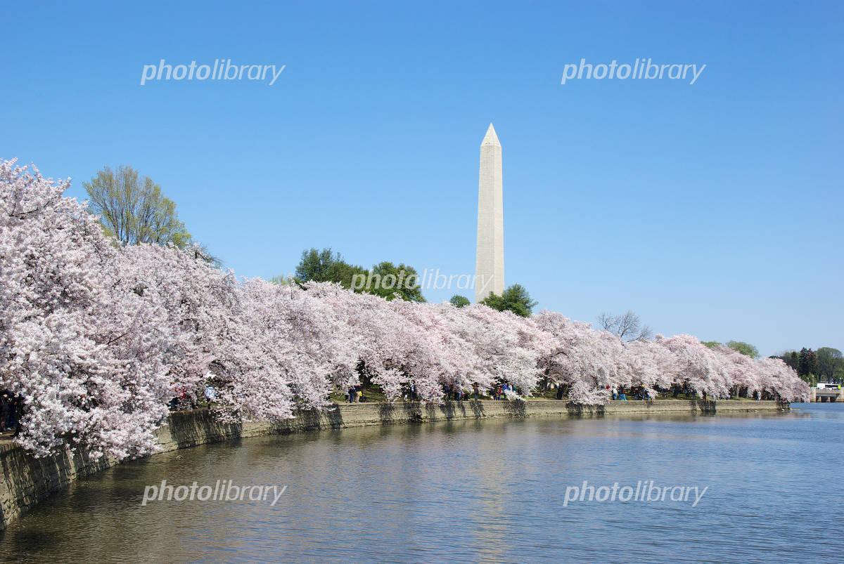 ワシントンモニュメントと桜並木-写真素材 ワシントンモニュメントと桜並木 画像ID 423992