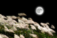 Pampas grass and moon synthesis Stock photo [421652] Flower