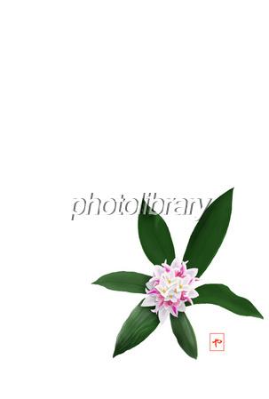 沈丁花 イラスト素材 486886 フォトライブラリー Photolibrary