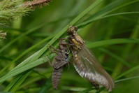 Emergence of a dragonfly Stock photo [488168] Emergence