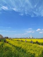 Rape field of Gongendo Tsutsumi Stock photo [527497] Saitama