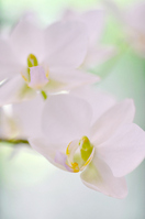 White orchid Stock photo [561612] White