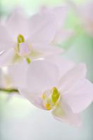 White orchid Stock photo [561612] White