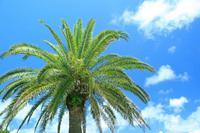 Palm tree Stock photo [562946] Palm