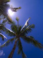 Palm tree Stock photo [564587] Okinawa