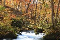 Oirase stream Stock photo [717568] Autumn