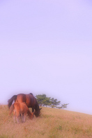 Parent-child Stock photo [719935] Horse