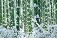 Sagano of bamboo forest Stock photo [720331] Bamboo