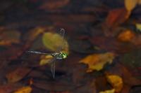 Takanetonbo Stock photo [725014] Dragonfly