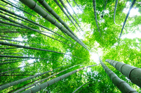 Bamboo forest Stock photo [726001] Bamboo