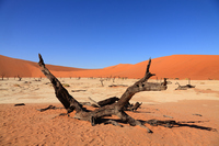 Africa Namib Desert Stock photo [727801] Africa