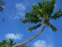 Tahiti Bora Bora palm trees Stock photo [730504] Tahiti