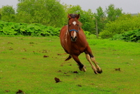 Scurry Stock photo [731127] Horse