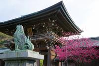 Miyajidake Shrine temple gate and Samuhisakura Stock photo [733986] Fukuoka
