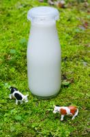 Milk and dairy cattle Stock photo [734769] Milk