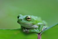 Frog Stock photo [957536] Frog