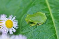 Frog Stock photo [957547] Frog