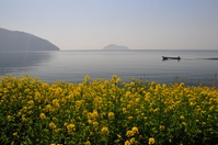 Spring haze of Lake Biwa Stock photo [957961] Rape