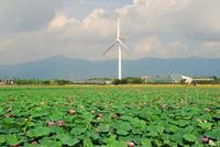 Lotus and windmill Stock photo [960300] Lotus