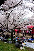 Cherry Blossom Stock photo [960733] Spring