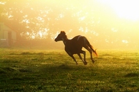 horse to apply Stock photo [964774] Morning