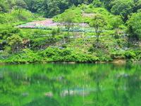 Gamagori hydrangea village Ho陀~Ke-chi Stock photo [968474] Ho陀~Ke-chi