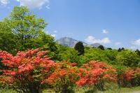 Mountains of mountain azalea and sunlight Stock photo [968556] Mountain